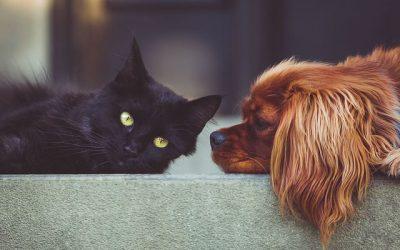 Pets or no pets?