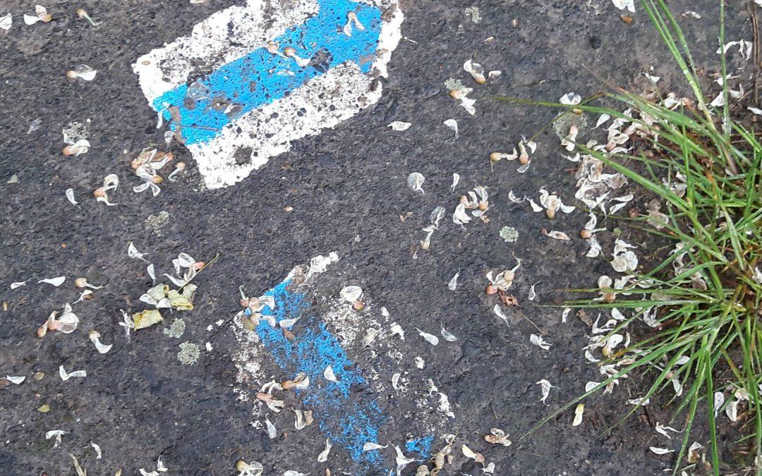 Veszélyek a túrán – Kéktúra Sümeg-Keszthely II